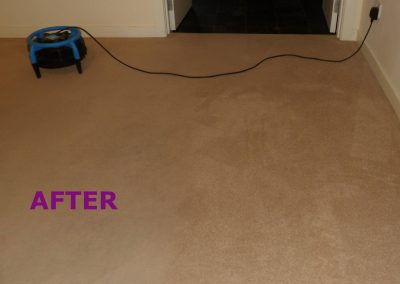 EOT carpet After cleaning