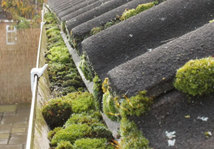 gutter full of moss